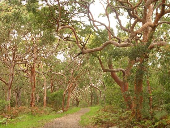 bush regeneration sydney